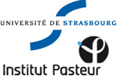 university_strasbourg_pasteur_institute_malaria