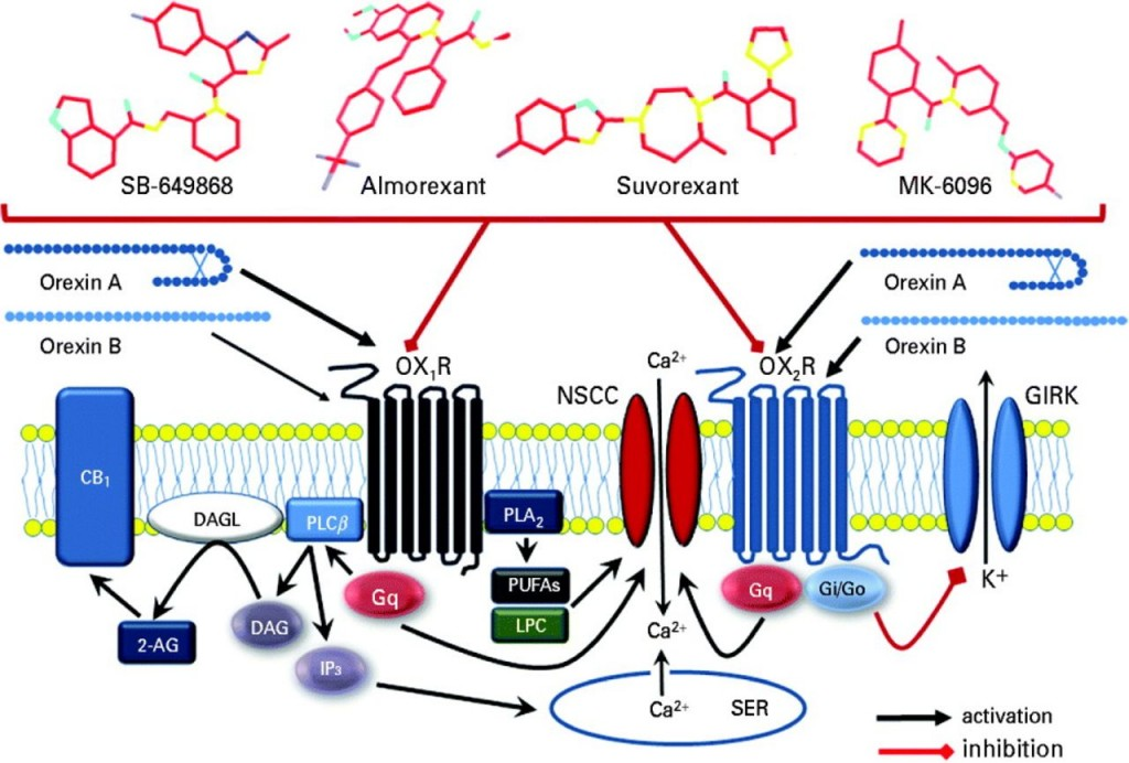 Actelion Orexin Insomnia trial biotech