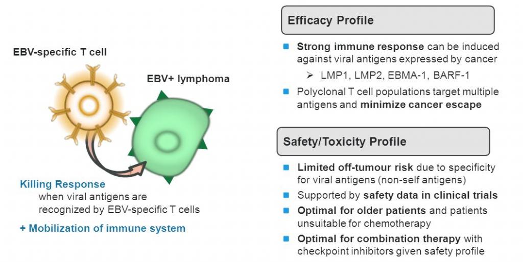 Cell Medica delenex car cbv 003
