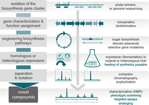 entrechem natural drug discovery metabolic engineering