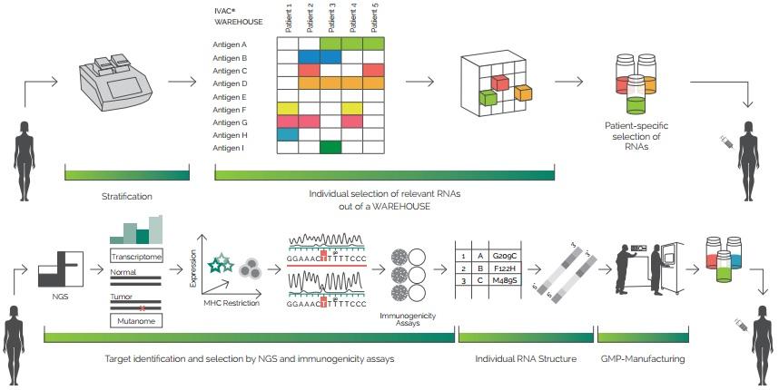 Figure 1. The mechanism of IVAC