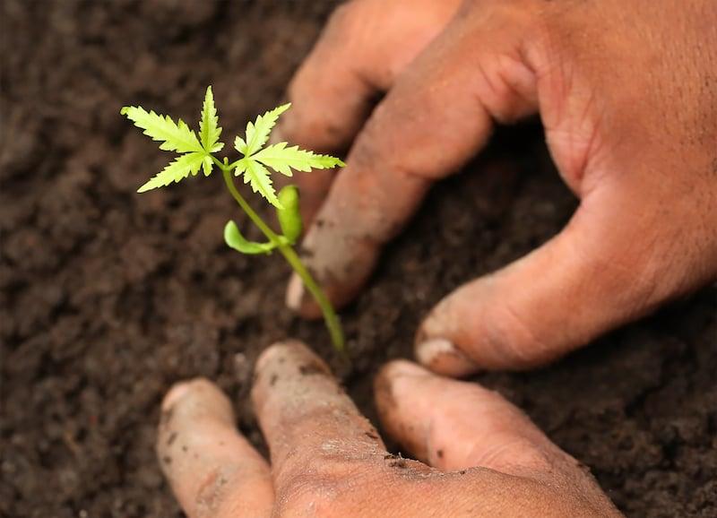 soil-planting-swapan-photography-small