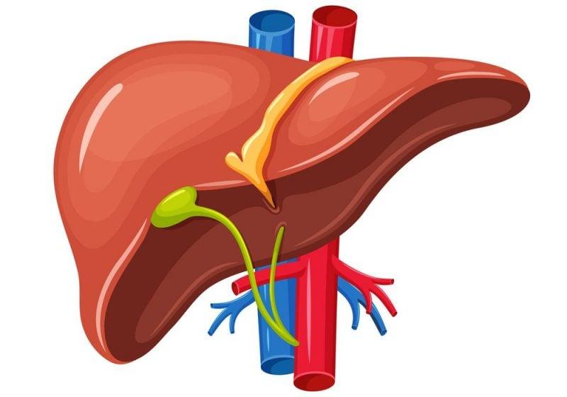 liver disease genkyotex fibrosis