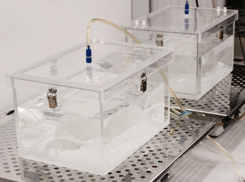 heirloom gina czarnecki bioreactors