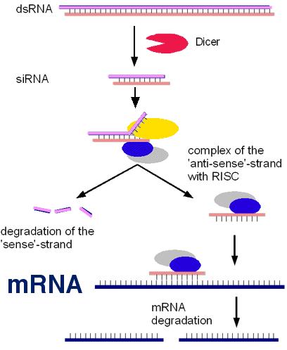 rna interference plant bioclay surrey