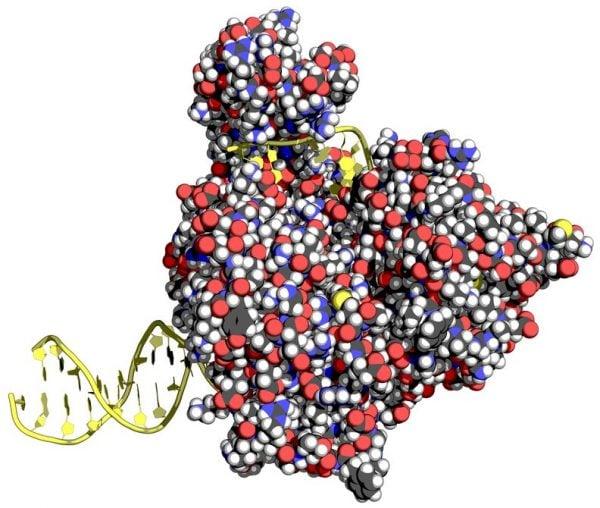 Aicuris DNA helicase