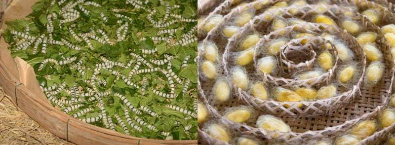 silkworm silk cocoon artificial silk