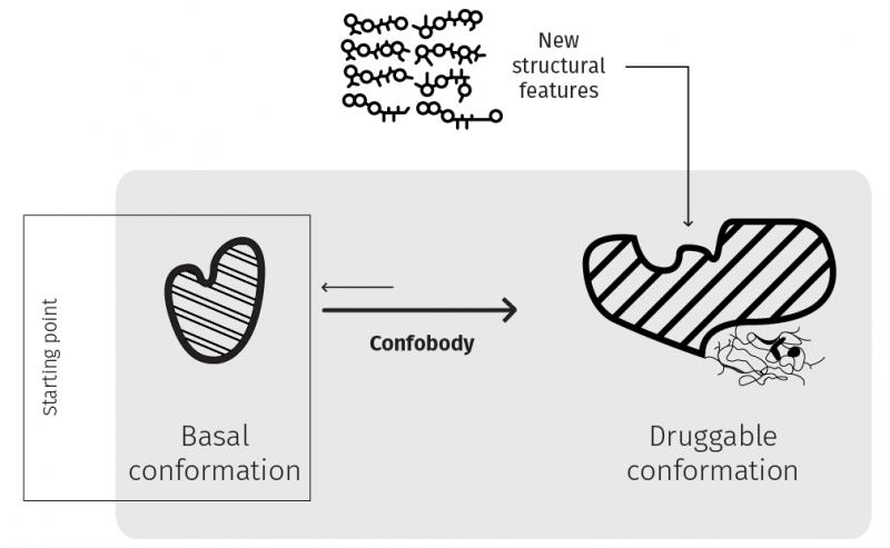 Confo Therapeutics Confobody