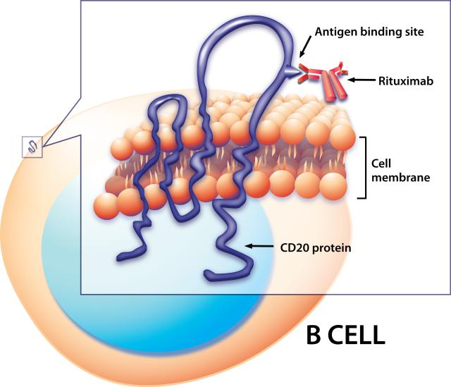 Rituxima_Binding_to_CD20_on_a_B_Cell_Surface_(6830897205)