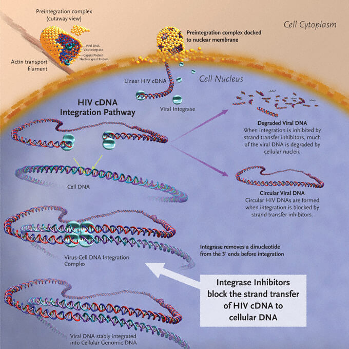integrase inhibitor gsk gilead hiv dueal therapy