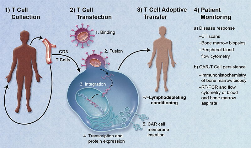 800px-CAR-Engineered_T-Cell_Adoptive_Transfer