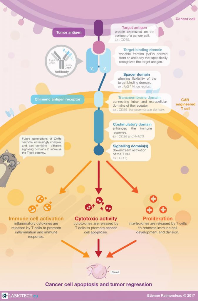 CAR-T therapy infographic