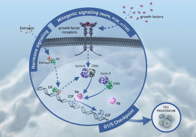 Kisqali Novartis Astex Pharmaceuticals mechanism of action