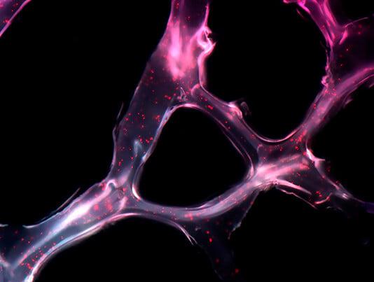 Wellcome Image Awards MIT microRNA cancer