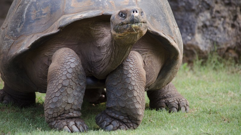 Galapagos filgotinib new trial