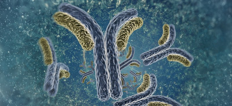 antibody_micromet_baeauerle