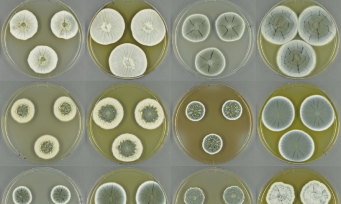 fungi genome sequencing novel antibiotics