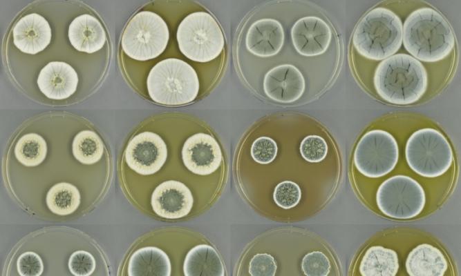 fungi genome sequencing novel antibiotics