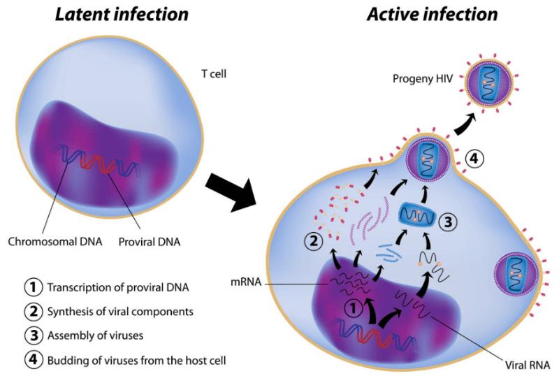 Abivax HIV Cure virus reservoir
