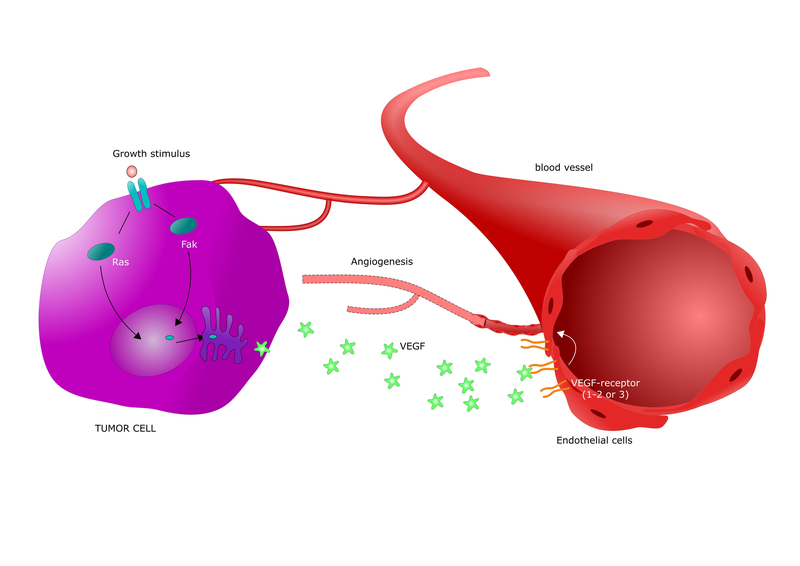 Cancer-Vaccine-VEGF