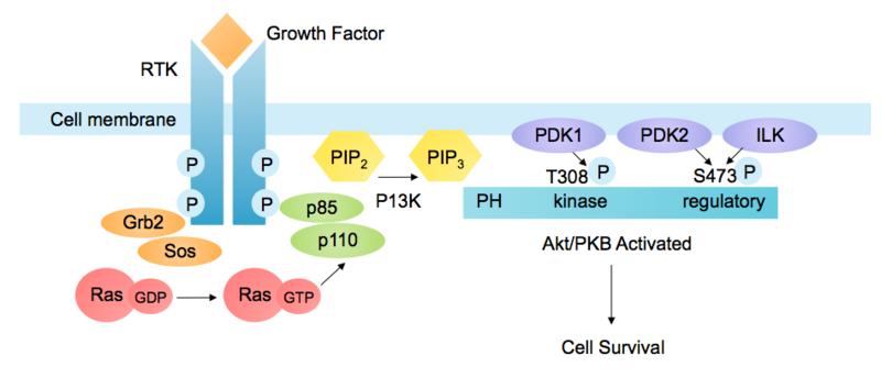 P13K-Akt_Pathway_Lymphoma