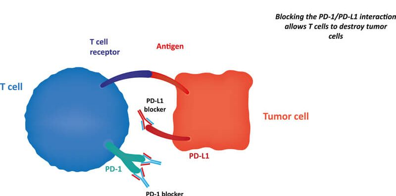 PD-1_Immunotherapies
