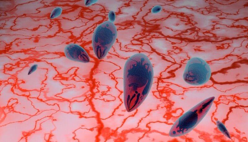 Vaximm brain tumor bacteria phase results