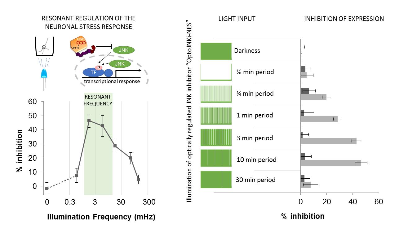 optogenetics cell resonance neuron cancer
