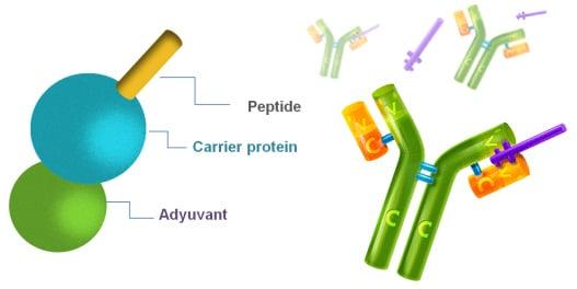 Araclon Biotech Alzheimers vaccine amyloid beta