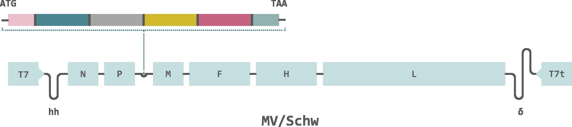 Themis-Chikungunya-Vaccine