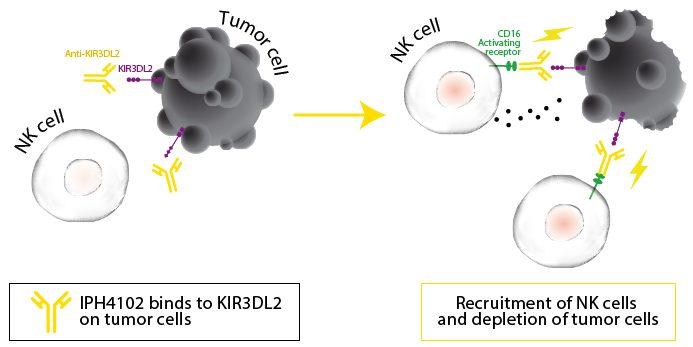 innate pharma cancer antibody nk cell