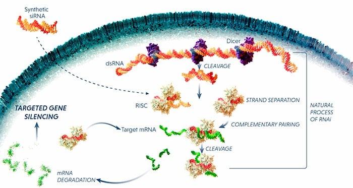 Alnylam Sanofi Hemophilia RNAi