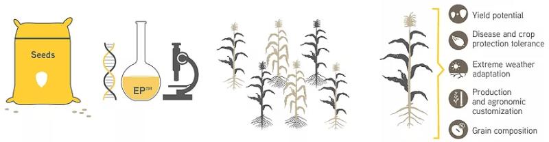 kaiima herbicide resistance basf