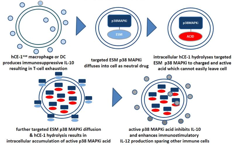 Merck ventures macrophage pharma p38mapi cancer