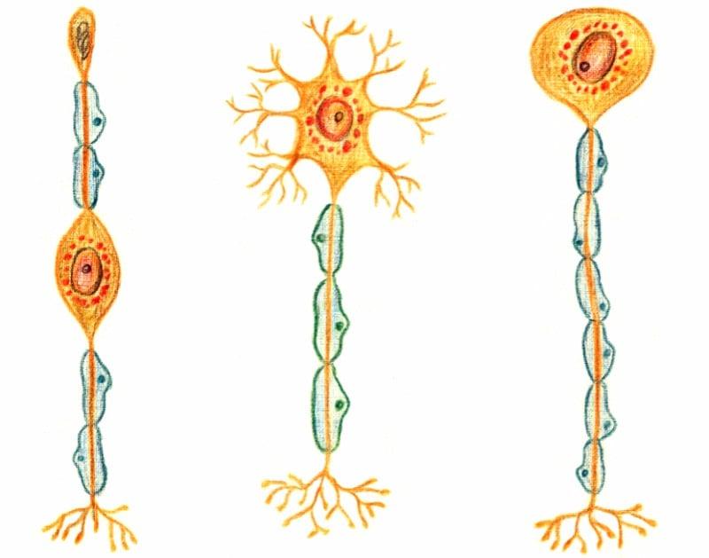 probiodrug-alzheimers-disease-mechanism