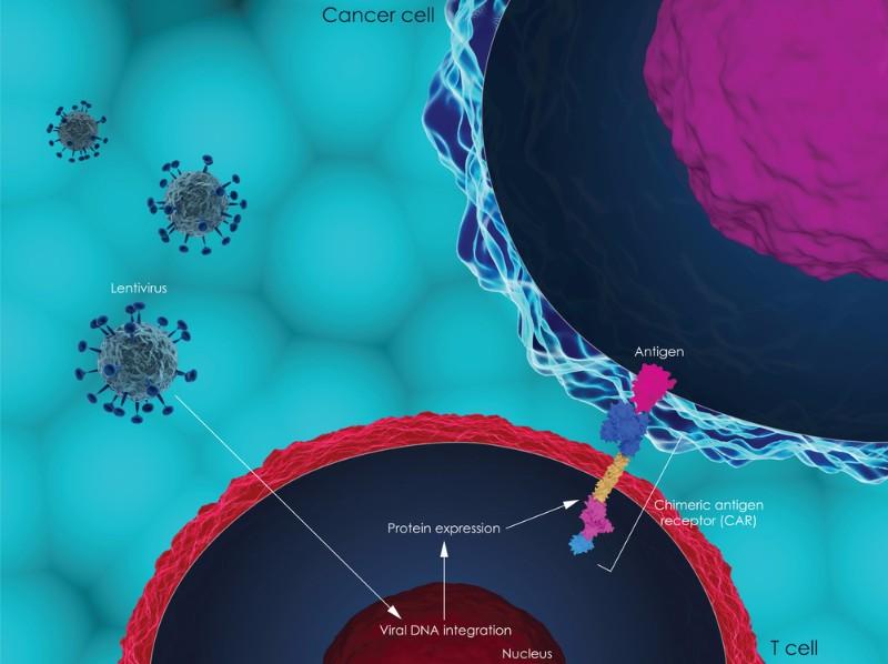 Cellectis CAR-T clinical trial halt