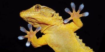 Gecko Biomedical Setalum surgical glue CE mark approval