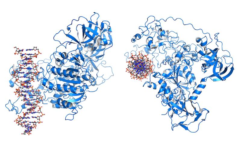 DNMT3 is an enzyme from a group of DNA methlytransferases, which modify DNA in order to regulate gene expression and activity.