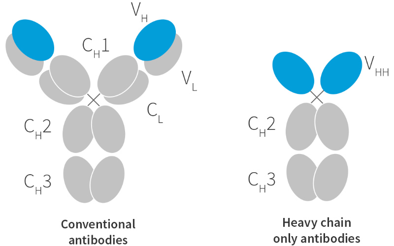 Ablynx nanobodies