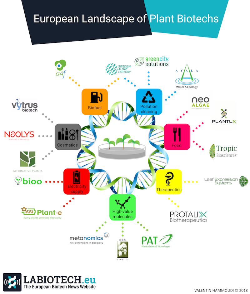 Infographic Plant Biotechnology Europe