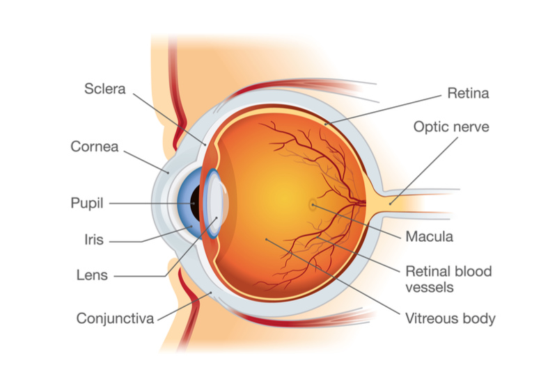 French Biotech Restores Vision in Humans with Sub-retinal Implant