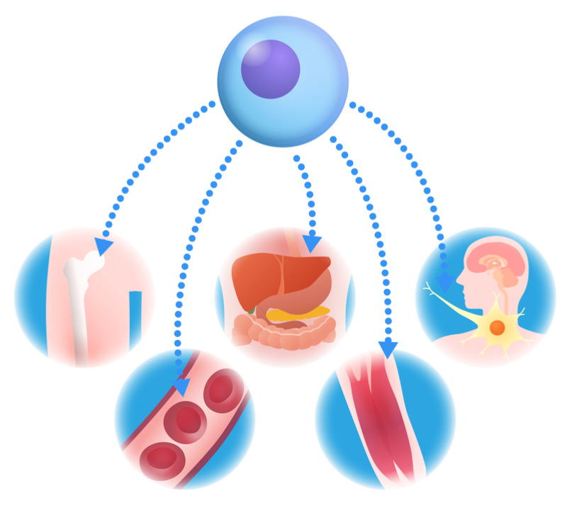 French Biotech Uses Gut Microbiota for Transplant Immune Reactions