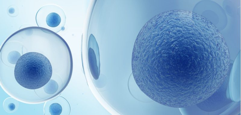 cell therapy atelerix encapsulation