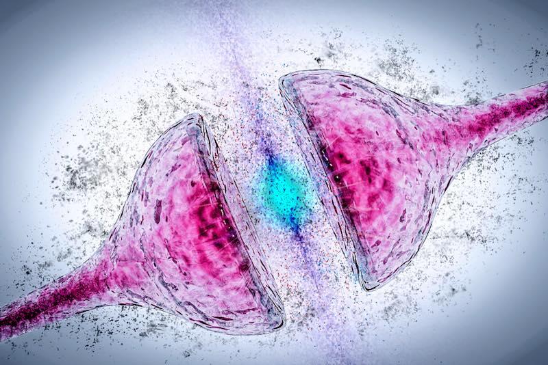 neuron synapse alzheimer's disease