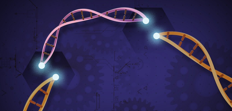 CRISPR-Cas9 DNA Damage