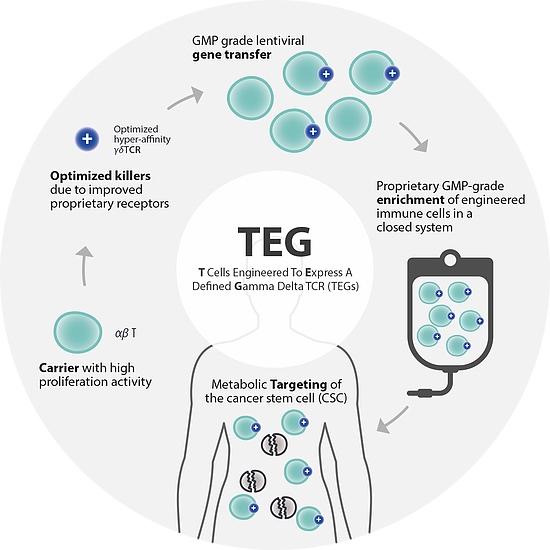 Gadeta gamma delta T cell approach