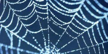 Vaccines & spider silk and AMsilk