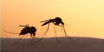 oxitec dengue