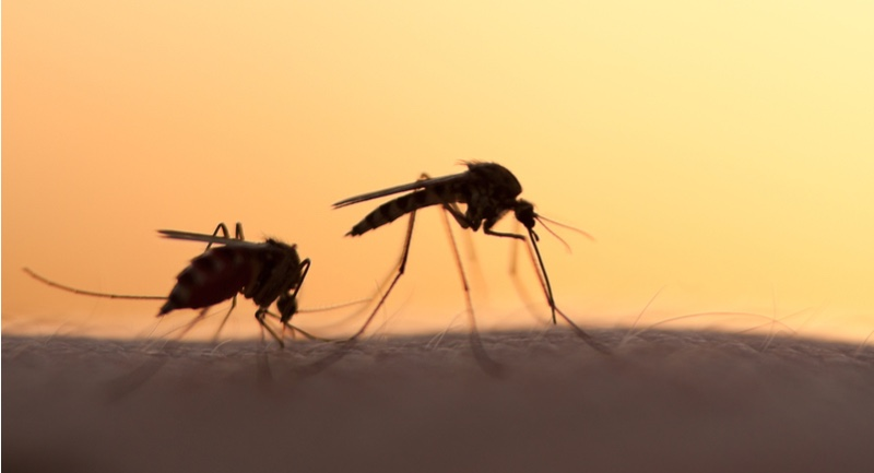 emergex vaccines dengue ebola influenza