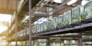 How Plant Biotechnology Can Give Us Better Food and Medicines
